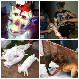 Monkeys used as test subjects, Animals sacrificed in satantic cults, Rabbits killed after cosmetic testing, Dogs used is dog fights