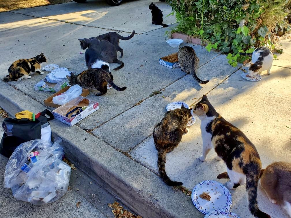 Who Knew That Cats Are Their Protectors >> Logan Oc Animal Care Wrong To Return Sheltered Cats Back Into